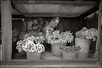 Havana, Cuba:<br /> Flower sender's shop window