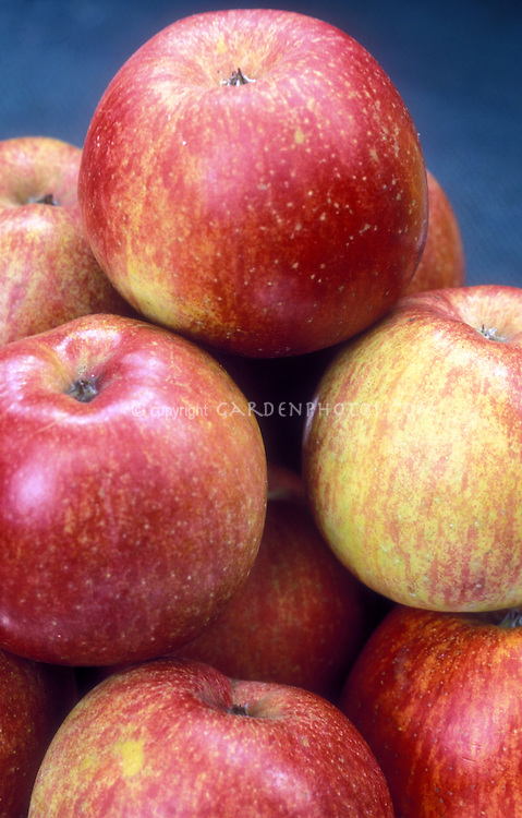 "Apple Fuji . Heirloom apple variety. Fuji was developed at Tohuku Research Station in Morioka, Japan.  First brought to light from New Zealand in the 1980s.  It's an aromatic and juicy apple, with a spicy, crisp sweetness.  An exceptional eating apple for those with a ""sweet tooth."""