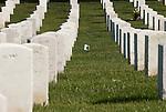 Between Rows of Tombstones
