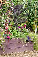 Kale 'Redbor' beautiful vegetable + ornamental flowers in raised bed container planter, tomatoes, petunias, etc