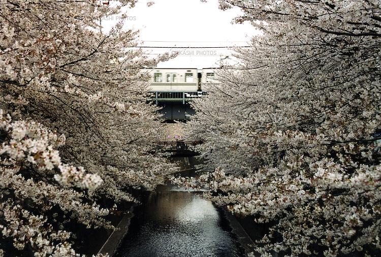Tokyo, Japan 2002.