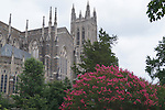Duke Chapel behind Myrtle tree in bloom
