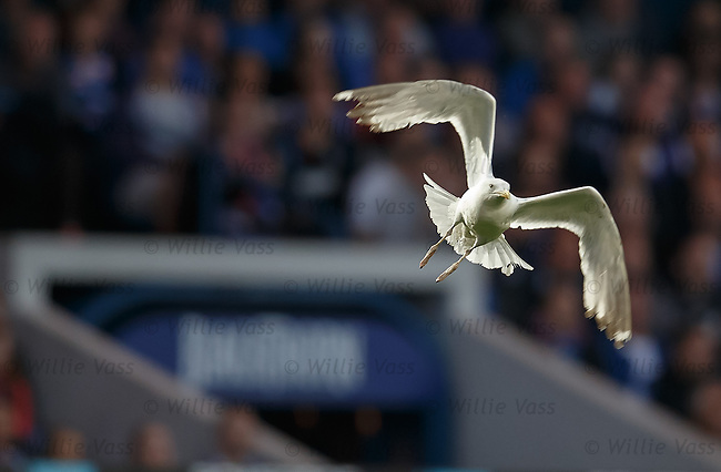 Dive bombing menace at Ibrox tonight