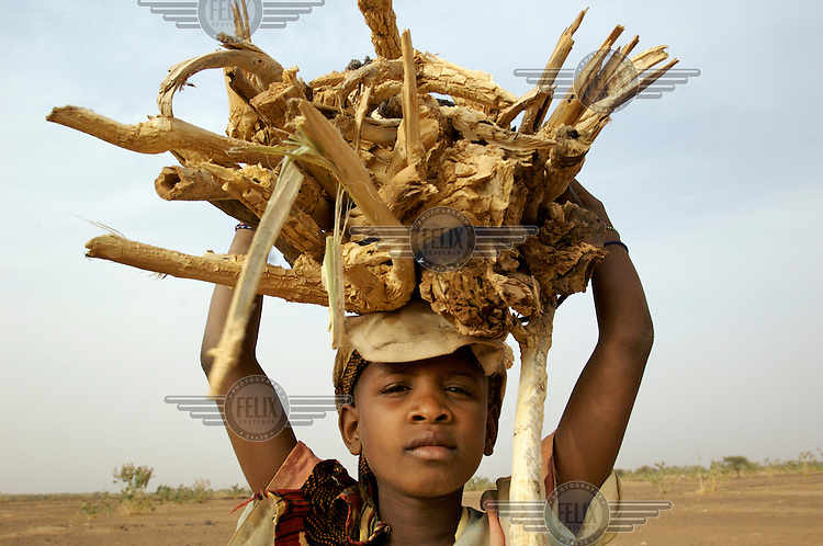 A girl carries firewood on her head in the village of Intedeyne. /Felix Features