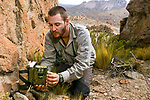 Andean Mountain Cat (Leopardus jacobita) biologist, Juan Reppucci, checking camera trap, Abra Granada, Andes, northwestern Argentina