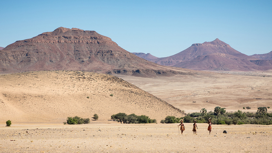 Having Collected Firewood Near The River, A Group Of Himba Women Head Home To Their Settlement Near Purros.