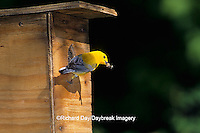 01504-00110 Prothonotary Warbler (Protonotaria citrea) male with food at nest box, Marion Co.   IL