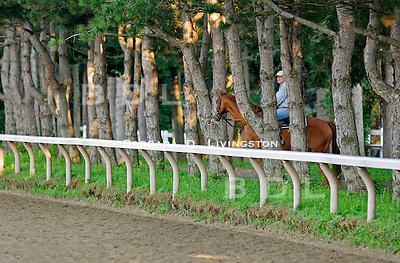 Saratoga Race Course, Saratoga Racetrack, beautiful horse racing, Thoroughbred racing, horse, equine, racehorse, morning mood