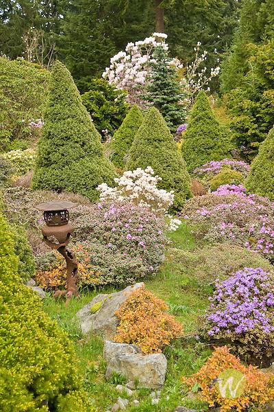 Ramsey Rock Garden and Meerkerk Rhododendron Garden, Whidbey Island ...