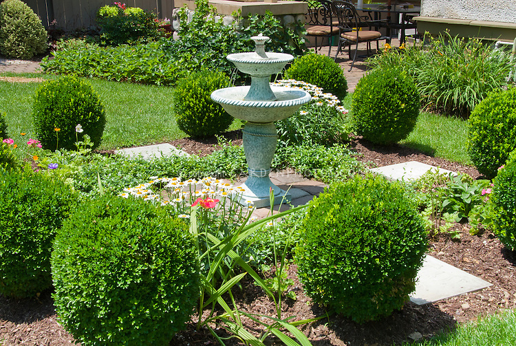 Formal Garden Scene With Clipped Boxwood And Fountain In Backyard | Plant U0026 Flower Stock ...