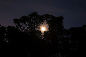 Fazenda Bauplatz, Brazil. Full moon rising between the trees.