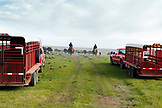 USA, Wyoming, Encampment, cowboys move cattle towards a corral to be branded, Big Creek Ranch