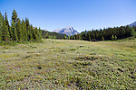 The Sunshine Meadows are situated at an average elevation of 2220m (7,300 ft), the meadows straddle the Continental Divide and the boundary between Alberta and British Columbia and is surrounded by the Canadian Rockies. In the winter, it is a large ski resort.  In the summer, there are many hikes available and wildflowers abound.