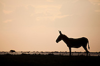 Donkey in silhouette on the shores of lake Xau