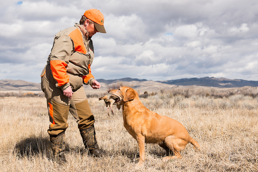 Margo Ellis-Lingohr of Helena receives a bird from her dog Meg during a retreiver hunt test sponsored by Missouri Headwaters Gun Dog Club in Three Forks on April 5, 2014.
