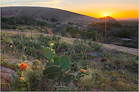 The sun was rising over Turkey Rock in the Texa Hill Country as I patiently waited for the Prickly Pear Cacti to open their blooms. While the flowers do close at night, they open as the first light of day appears. This image was taken at Enchanted Rock State Park on a summer morning.