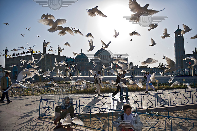 A flight of doves take off outside the Shrine of Hazrat Ali, also known as the Blue Mosque, the city's major tourist attraction.