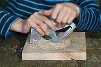 Kind, Junge macht Pesto aus Walnüssen, Sonnenblumenkernen, Olivenöl und Parmesankäse selbst, Sonenblumenkerne werden mit dem Wiegemesser zerkleinert, Walnuss, Walnuß, Wal-Nuss, Wal-Nuß, Nüsse, Ernte, Juglans regia, Walnut, Noyer commun, Sonnenblumen, Helianthus, Sunflower