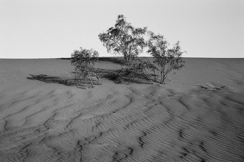 Death Valley- Mesquite Sand Dune, Spring 2018, 35mm Film
