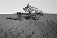 Death Valley- Mesquite Sand Dune, Spring 2018, 35mm Film