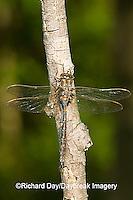 06364-001.20 Springtime Darner (Nasiaeschna pentacantha) male, Marion Co  IL