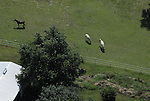 Aerial view of horses
