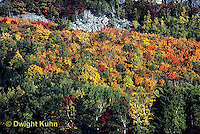 KN07-029z  Forest - autumn, Mt. Kineo, Maine