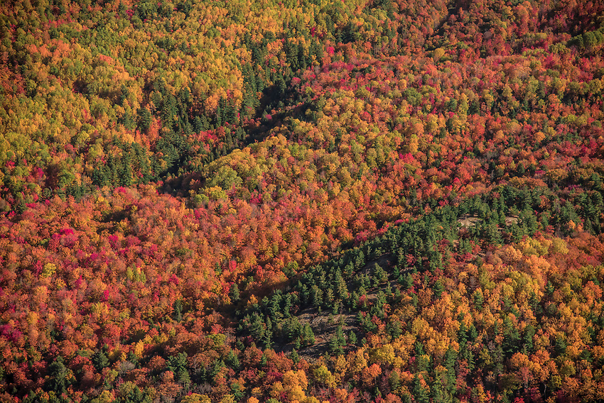 Aerial photography of forest with fall color near Marquette, Michigan.