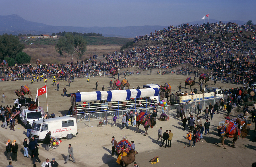 Selcuk, Turkey, 21/01/01..The traditional sport of camel wrestling is popular throughout western Turkey in the winter months. The largest event is the annual festival held in Selcuk on the third weekend of January: up to 20,000 people attend.