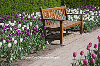 63821-21007 Bench in Tulips (Tulipa  'Negrita' (purple), 'Inzell' (White), and 'Mistress' (Pink) at Cantigny Gardens, Wheaton, IL