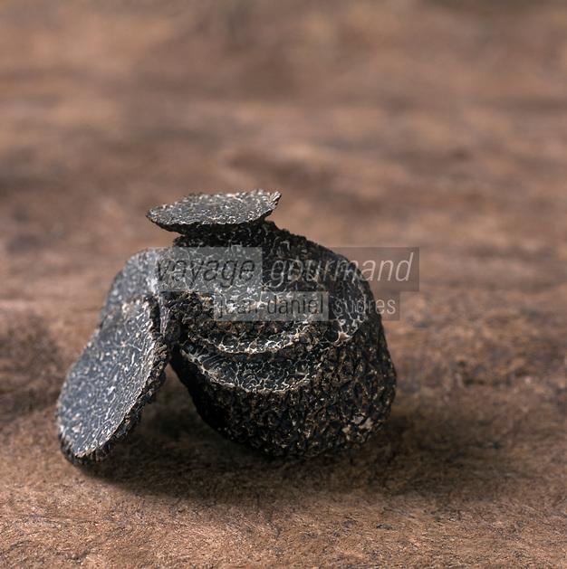 46 Europe:France/Midi-Pyrénées/46/Lot : Truffe du Périgord,truffe noire, ou Tuber Melanosporum, chez Pierre-Jean Pebeyre Trufficulteur à Cahors - Stylisme : Valérie LHOMME // Perigord truffle, black truffle, Tuber melanosporum , in Pierre-Jean Pebeyre house in Cahors - Styling: Valerie LHOMME