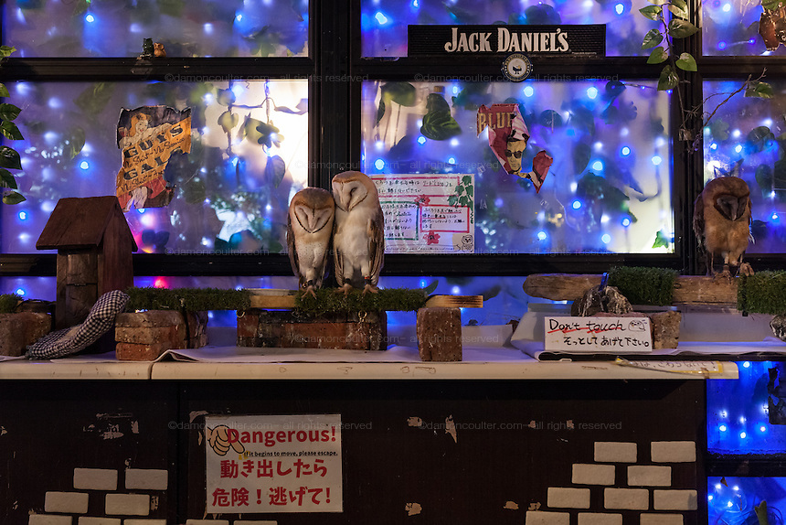Owls sleep insde an owl cafe in Akihabara, Tokyo, Japan. Friday April 15th 2016