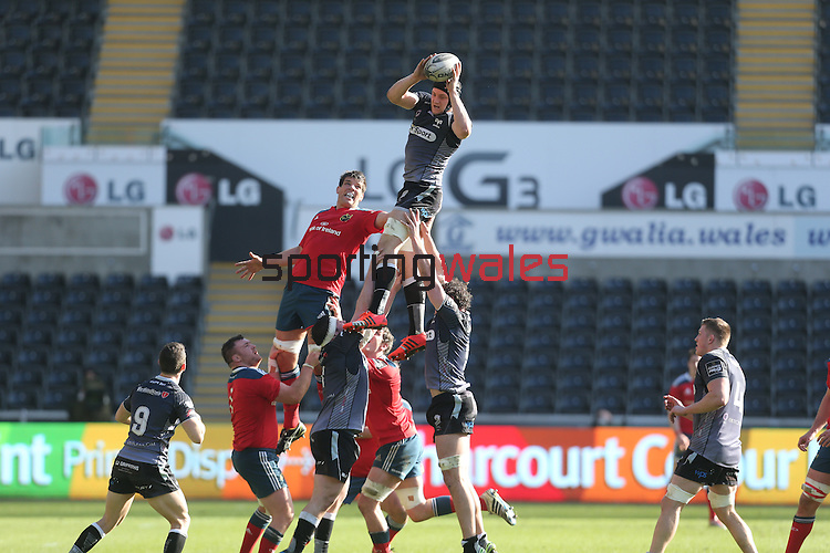 Ospreys flanker James King beats Munster lock Donncha O'Callaghan to the line out ball.<br /> Guiness Pro12<br /> Ospreys v Munster<br /> Liberty Stadium<br /> 07.03.15<br /> ©Steve Pope - SPORTINGWALES