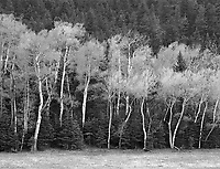 """Trees Along Colorado Highway 570"" <br />