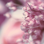 Little dryed plants in pink tones with a bokeh background.