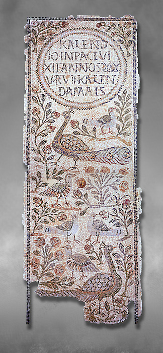 Roman mosaics from the north African Roman province of Africanus . Bardo Museum, Tunis, Tunisia.