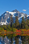 Mount Baker-Snoqualmie National Forest, Washington<br /> Autumn colors around Picture Lake with Mt Shuksan in the background