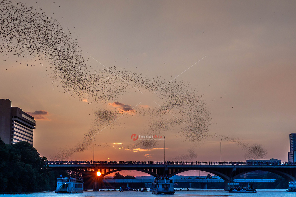 Emergence of the bats of the Congress Avenue Bridge in Austin, Texas at dusk. Nature in the midst of sophistication marks Austin, Texas. The Austin bats are proof of this. Every year during March and April Mexican free-tailed bats migrate to Austin from the south and make their home under the Congress Avenue Bridge.