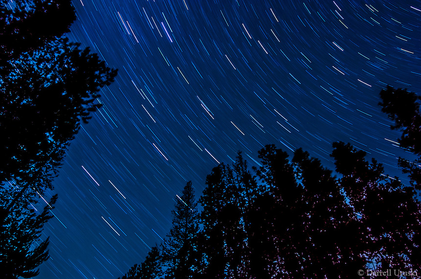 Fine Art Photograph of Star Trails in motion that filled the sky. The tall trees frame this photograph that was captured in British Columbia, Canada.
