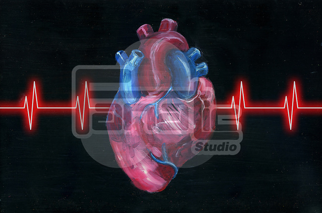 Illustration of human heart with pulse trace over black background