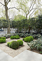 This urban garden is planted with box and surrounded by gravel overlooked by the plane trees that epitomise this part of London