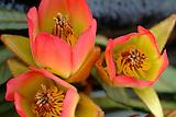 flore d'exception