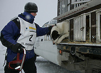 Saturday February 25, 2006 Willow, Alaska.  Charlotte Matheis takes one of her dogs from its box at the start day of the Junior Iditarod sled dog race.  Willow Lake.