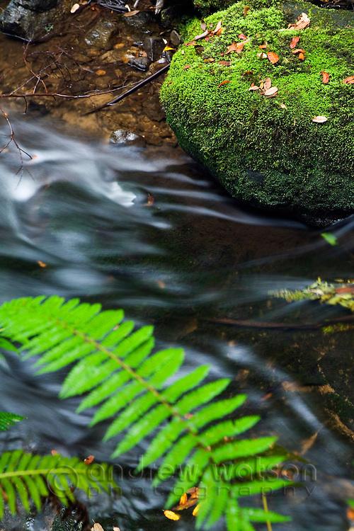 Rainforest stream in Mt Field National Park, Tasmania, Australia