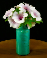 Pink Blush (Lavatera trimestris) flowers in vase  on table top. Oregon