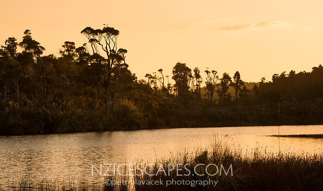 Sunset over coastal native forest and Gillespies Lagoon, Westland Tai Poutini National Park, South Westland, UNESCO World Heritage Area, New Zealand, NZ