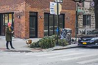 USA New York Alberi di Natale abbandonati dopo le feste Abandoned Christmas trees after holidays