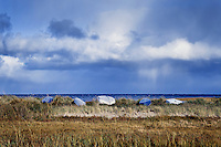 Rowboats, Boat Meadow Creek, Orleans, Cape Cod, Massachusetts, USA