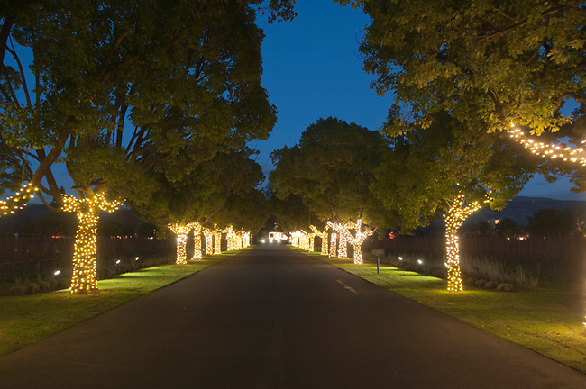 Holiday lights at St. Supery Vineyard in Napa Valley