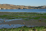 low tide and birds in Bodega Bay